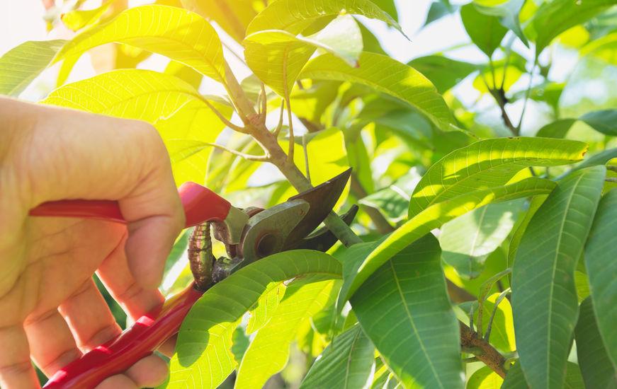 Sajátítsd el a zöldmetszés szakszerű technikáját!